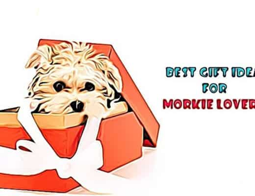 gifts for morkie lovers, gift ideas, dog gift ideas