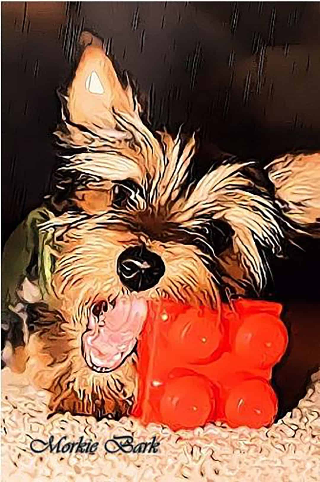 Morkie Barking, How to stop morkie barking, Morkie dog not to bark
